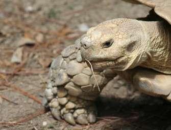 Kdo hledá v lomu želvy?