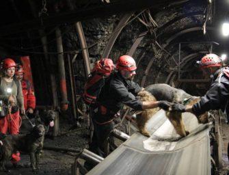 Záchranáři se psy zamířili do hlubiny