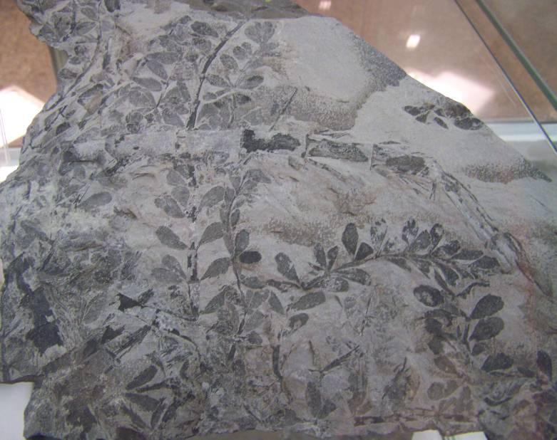 V podzemí se skrývá fosilní prales