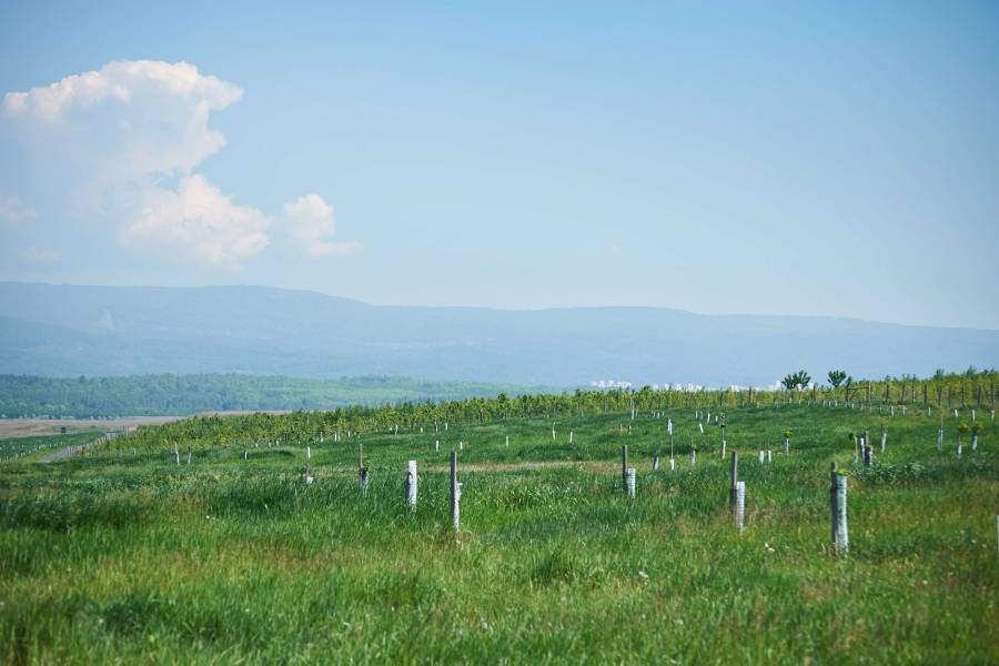 Lom ČSA: Rekultivace na 2202 hektarech
