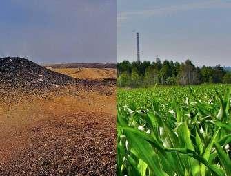 Na výsypce rostla i kukuřice