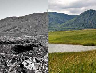 Díky rekultivacím byly vysázeny miliony stromů