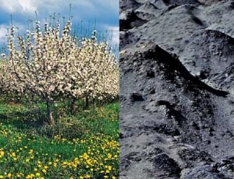 Jablka nahradila uhlí