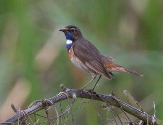 Na rekultivované plochy se vrací chráněné druhy