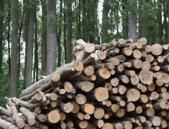 Finsko bude muset dovážet biomasu z Ruska