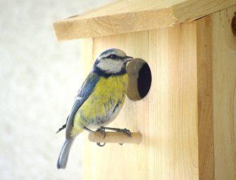 SD pokračují v podpoře hnízdění ptáků